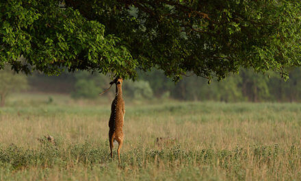 The Inspiration behind Rudyard Kipling's Unforgettable Classic 'The Jungle Book' – Kanha National Park